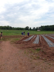 CSA Farm in New Jersey by Circespeaks