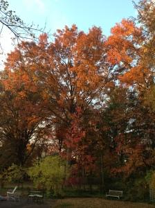 Fall Leaves by Circespeaks